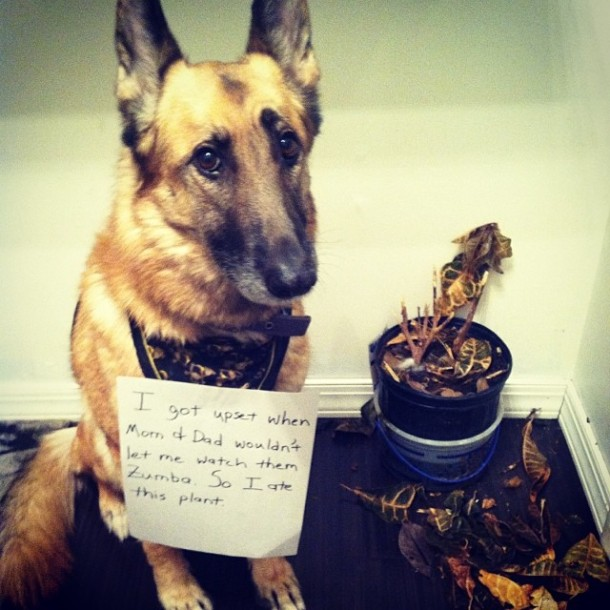 Yes, I submitted this to dogshaming.com.