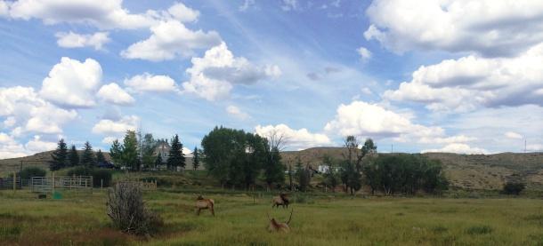 Elk Pano
